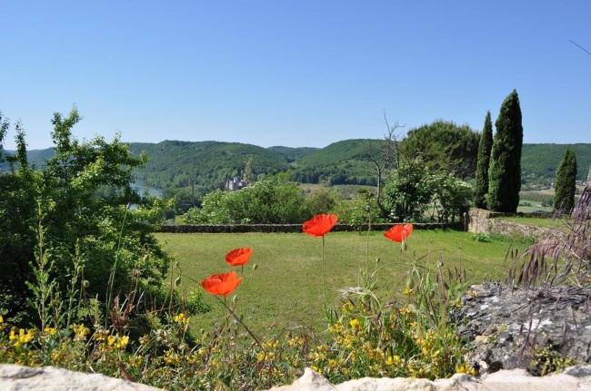 France poppy